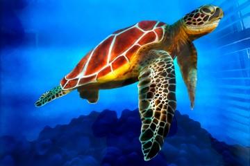 Sea Turtle auf Alu Dibond