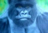 Bernd Gorilla