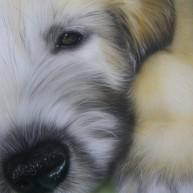 Irischer Wolfshund-Baby