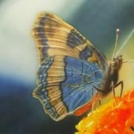 Lothar Schmetterling